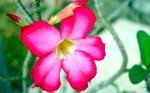 Bungaku