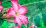 Bunga dan hujan.....