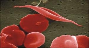 Haemoglobin darah
