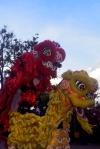 Kota Bima_Barongsai dari Etnis Tionghoa