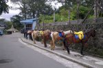 Kuda-kuda yang siap mengantar kita