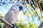 Burung di Balibird Park