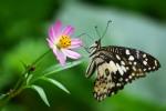 bunga dan kupu2 purbosari_05 y