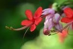 bunga uti sby_002