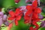 bunga Uti_001