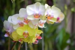 orchid _ 10