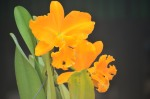 orchid _ 21